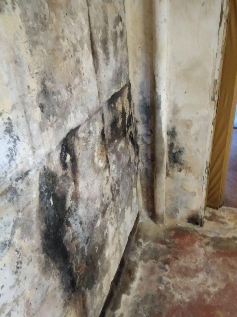 feuchte Kellerwand Holzvertäfelung abgerissen Schimmelteppich